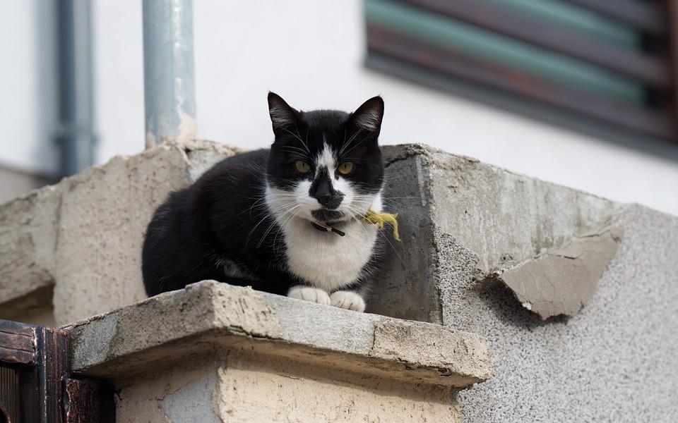 Est-il possible d'implanter une puce GPS dans le chat ?